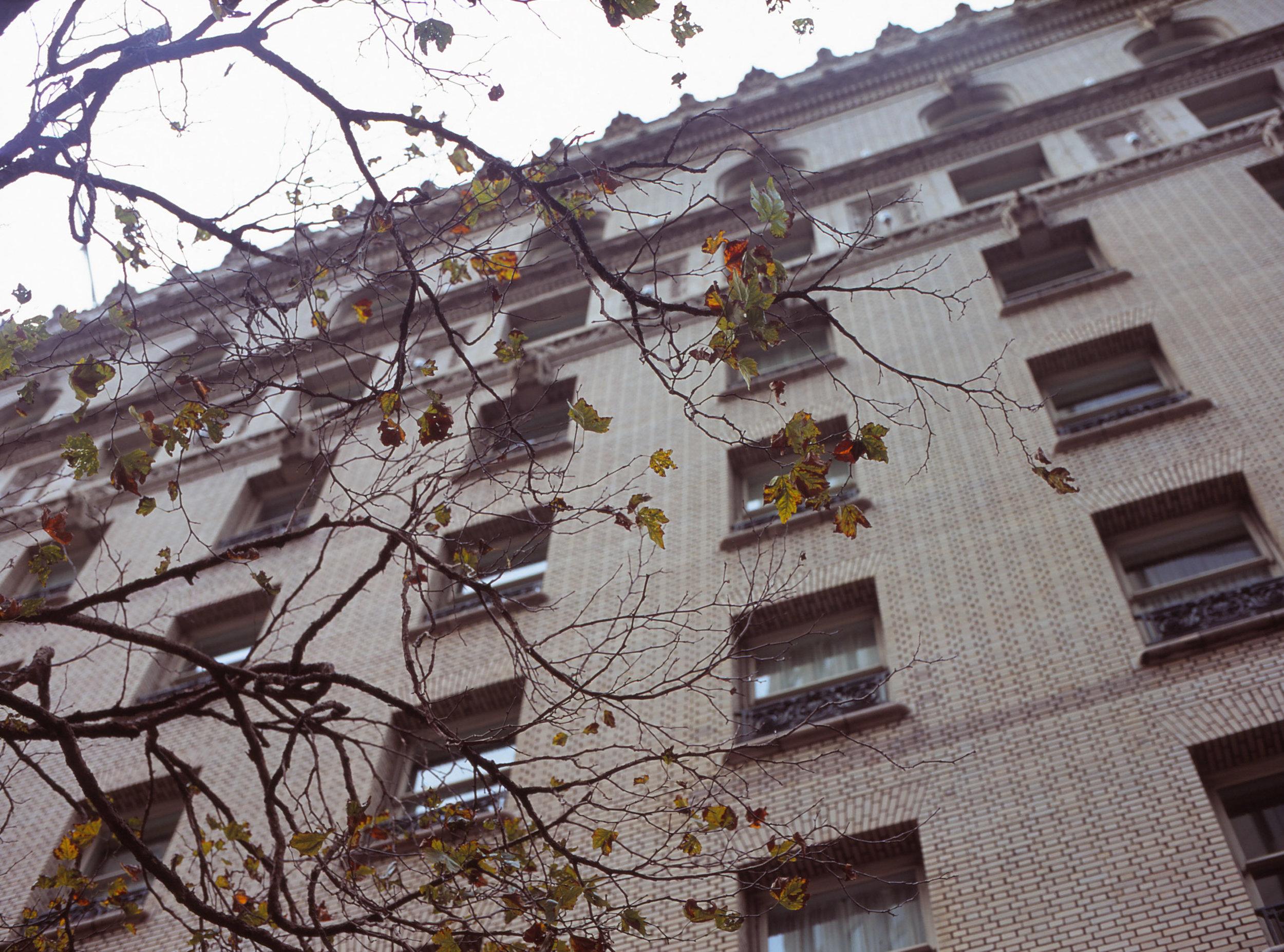 Mamiya - Velvia 100F - SF building and tree.jpg