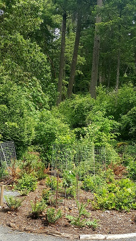 Woodlands 1.1.jpg