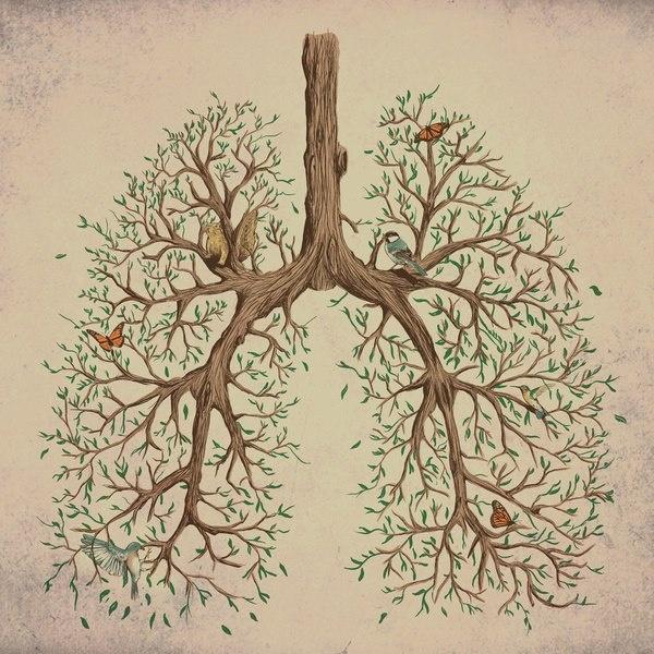 lung_birds.jpg