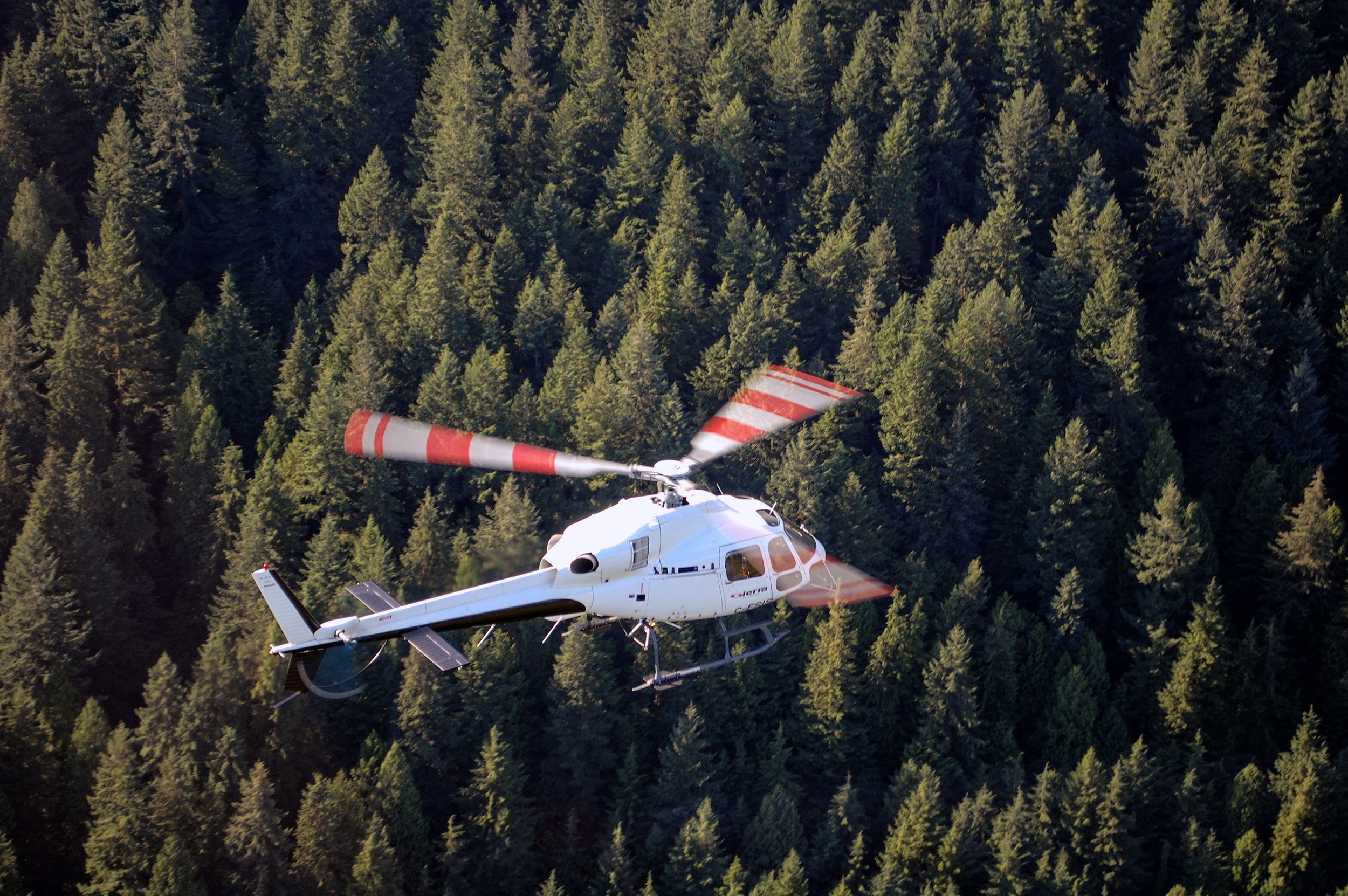 SierraHelicoptersVancouverForestry.jpg