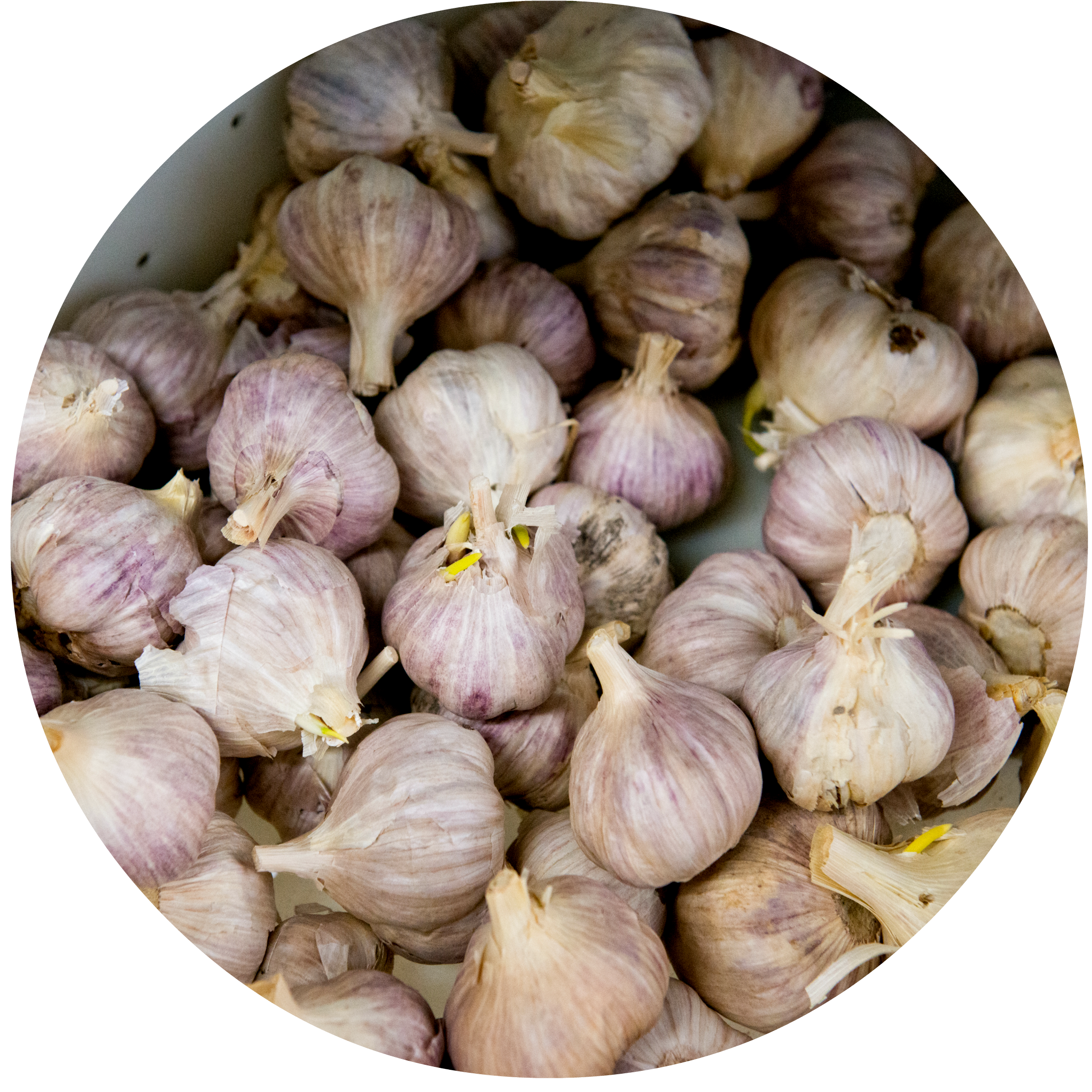4 (garlic).png