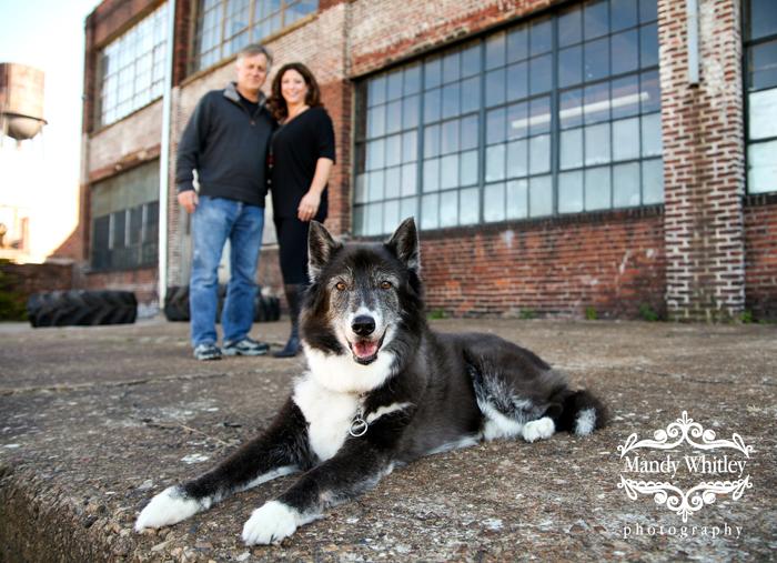 Nashville Pet Photographer