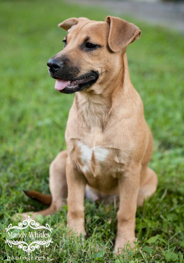 Nashville Pets for Adoption Nashville Dog Photographer