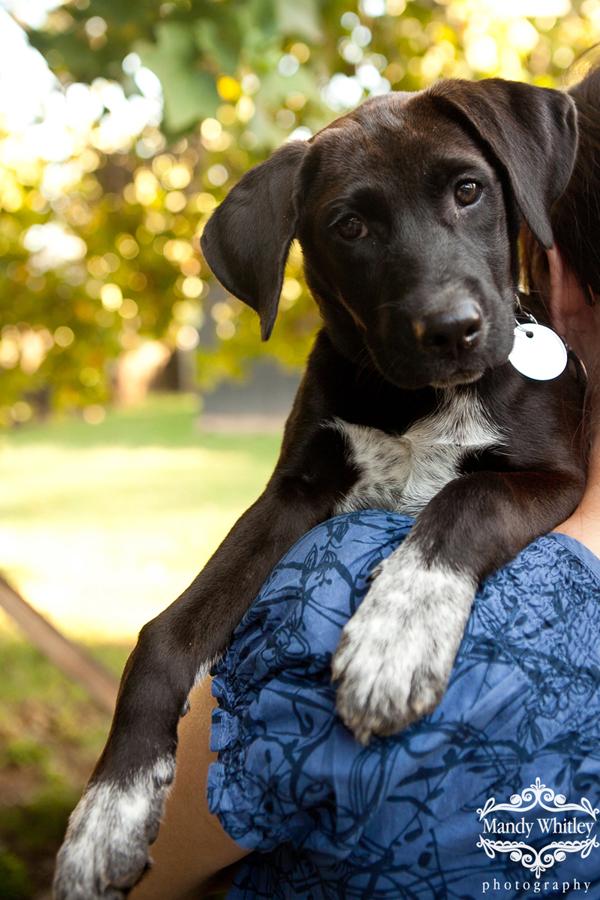 Nashville Dog Photographer East CAN Nashville Dogs for Adoption