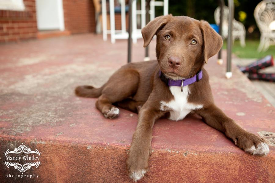 Nashville Pet Photographer East CAN Nashville Pets for Adoption