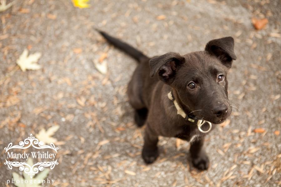 Nashville Pet Photographer Dog Photography