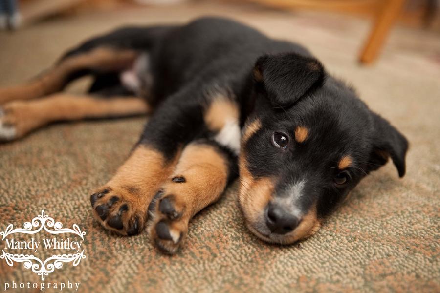 Foster Dog East CAN Nashville Dog Photographer
