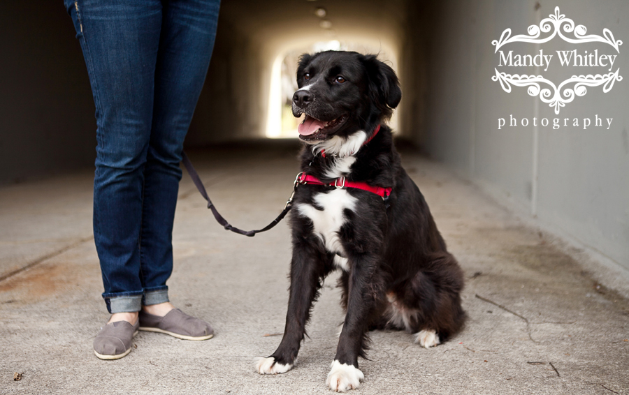 Nashville Dogs for Adoption