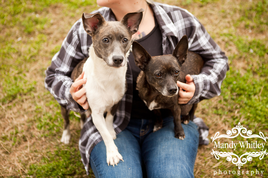 East CAN Dogs for Adoption Dog Photographer in Nashville