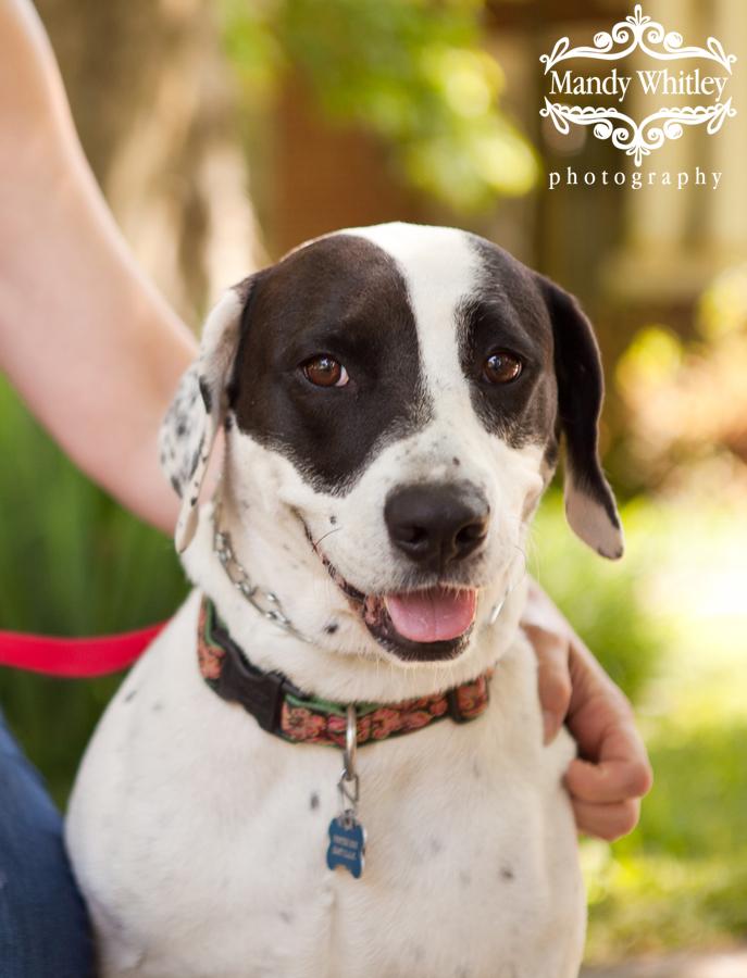 Nashville Dog Photographer Pets for Adoption
