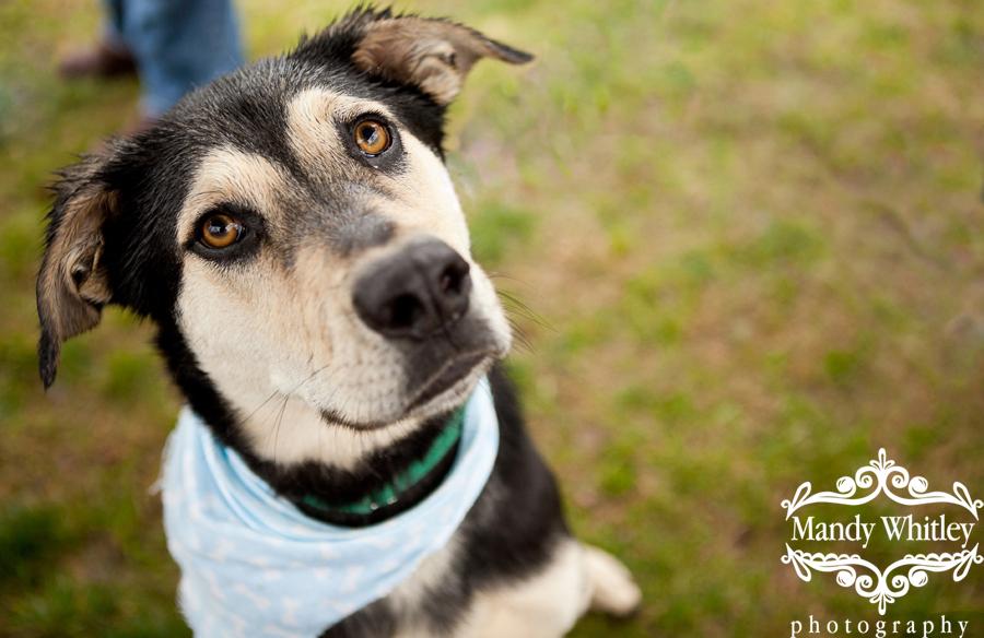 Nashville Lifestyles Cover Dog Contest Dog Photographer