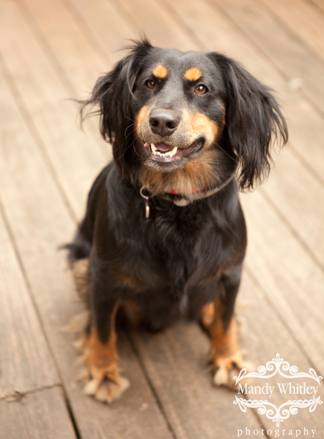 Foster Pets Nashville Pet Photographer
