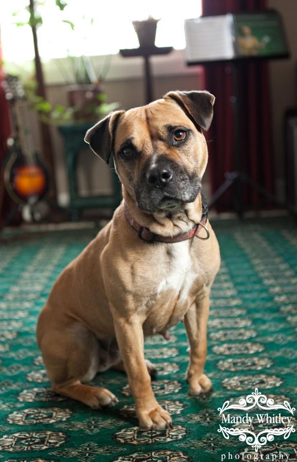 East CAN Nashville Dog Photographer