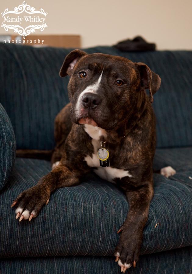 Dogs for Adoption in Nashville Dog Photographer