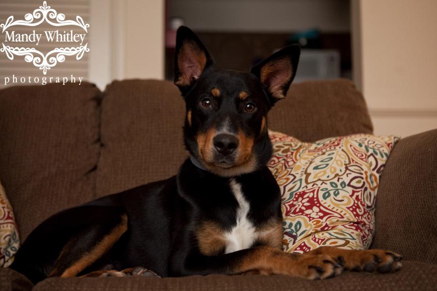 Nashville Dog Photographer