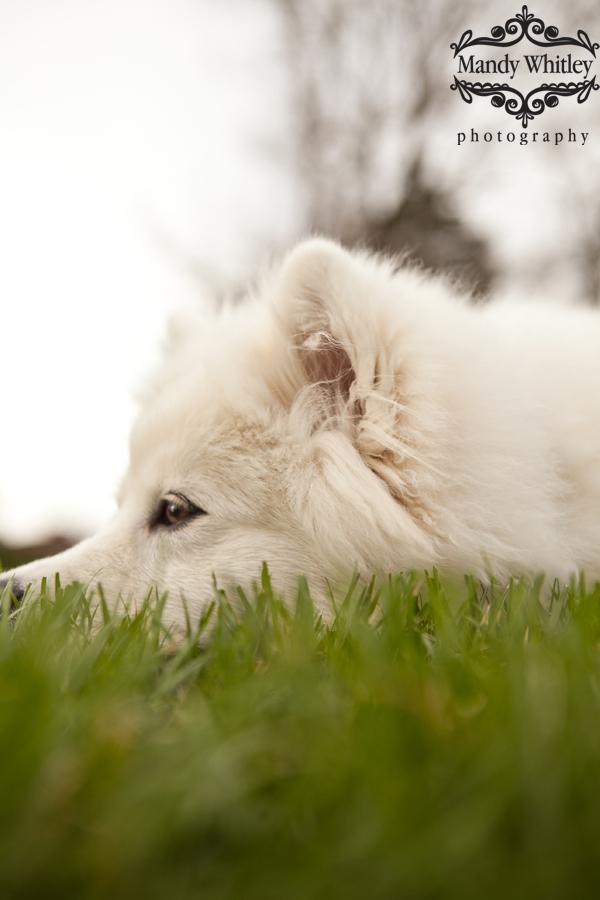 best dog photographer in nashville tn