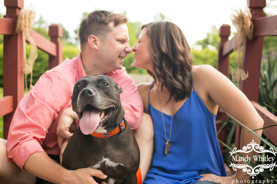 best engagement photos with dogs