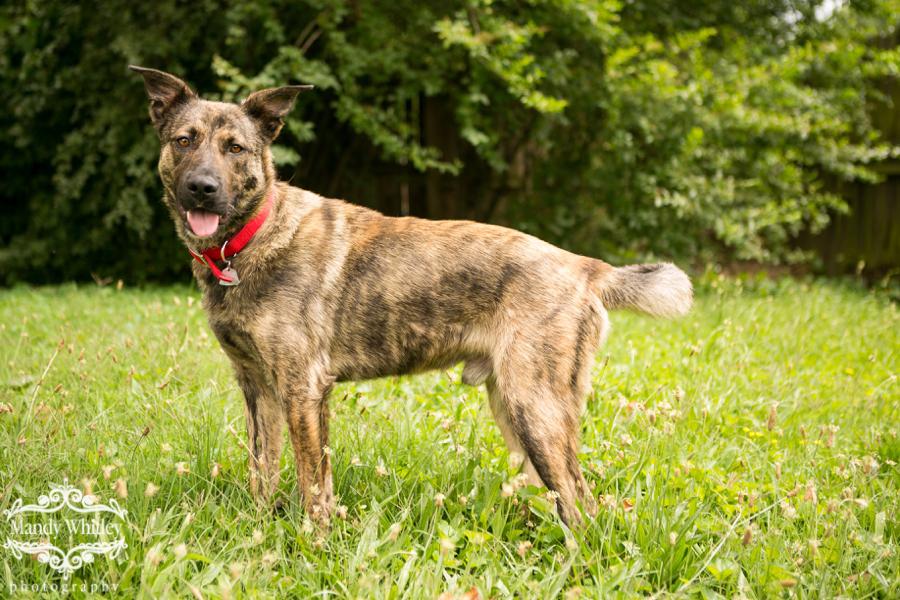 nashville dog photographer dogs for adoption