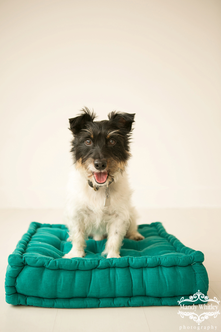 pet photographer in nashville tennessee