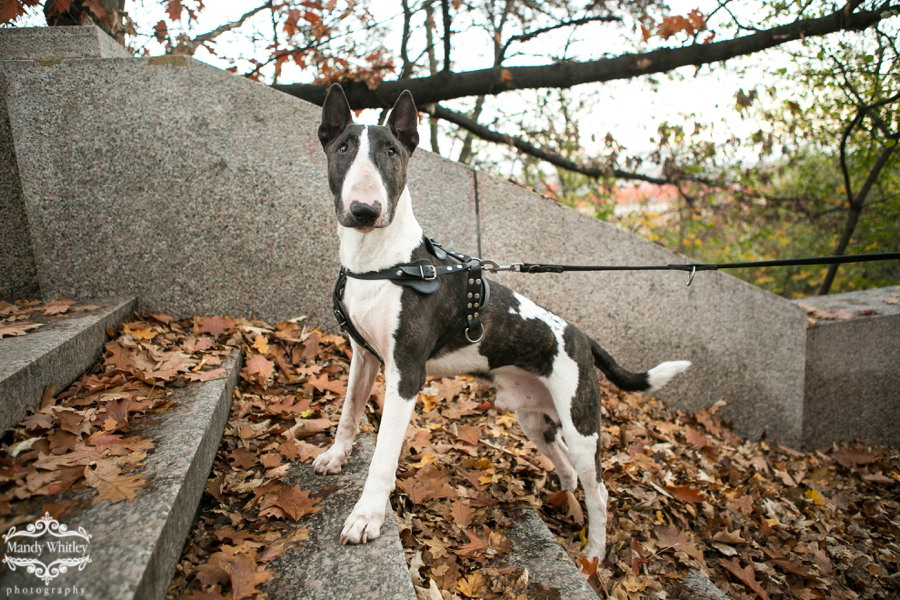 best dog photographers in tennessee