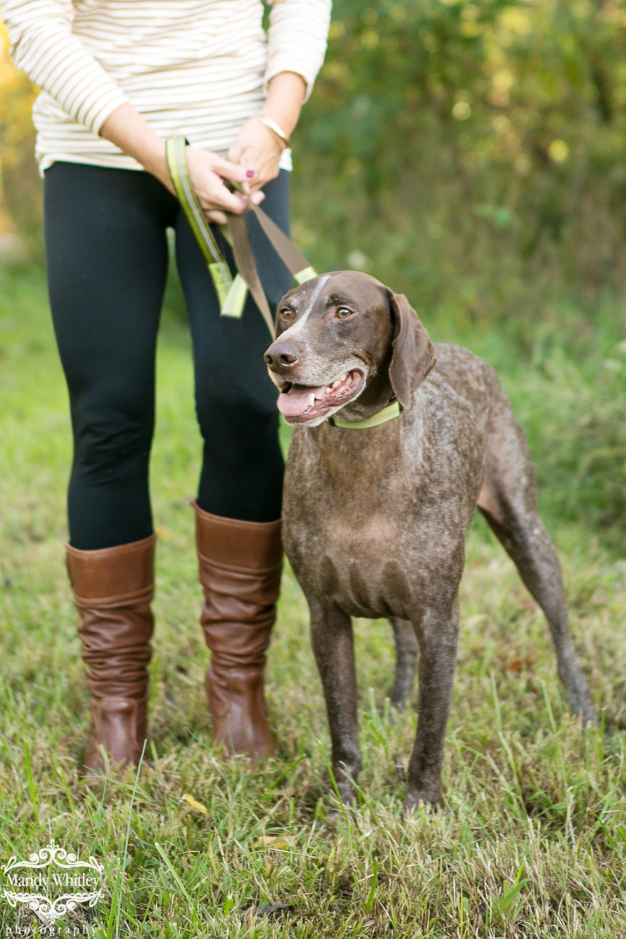 best dog photographers in nashville tn mandy whitley