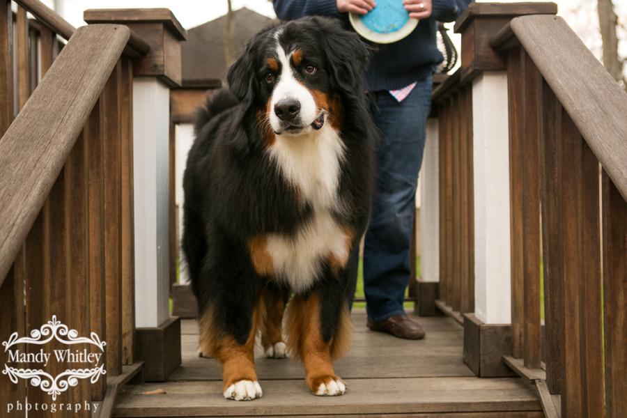 Nashville Dog and Pet Photographer Mandy Whitley Photography