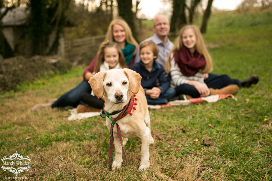 family photographer in brentwood tennessee