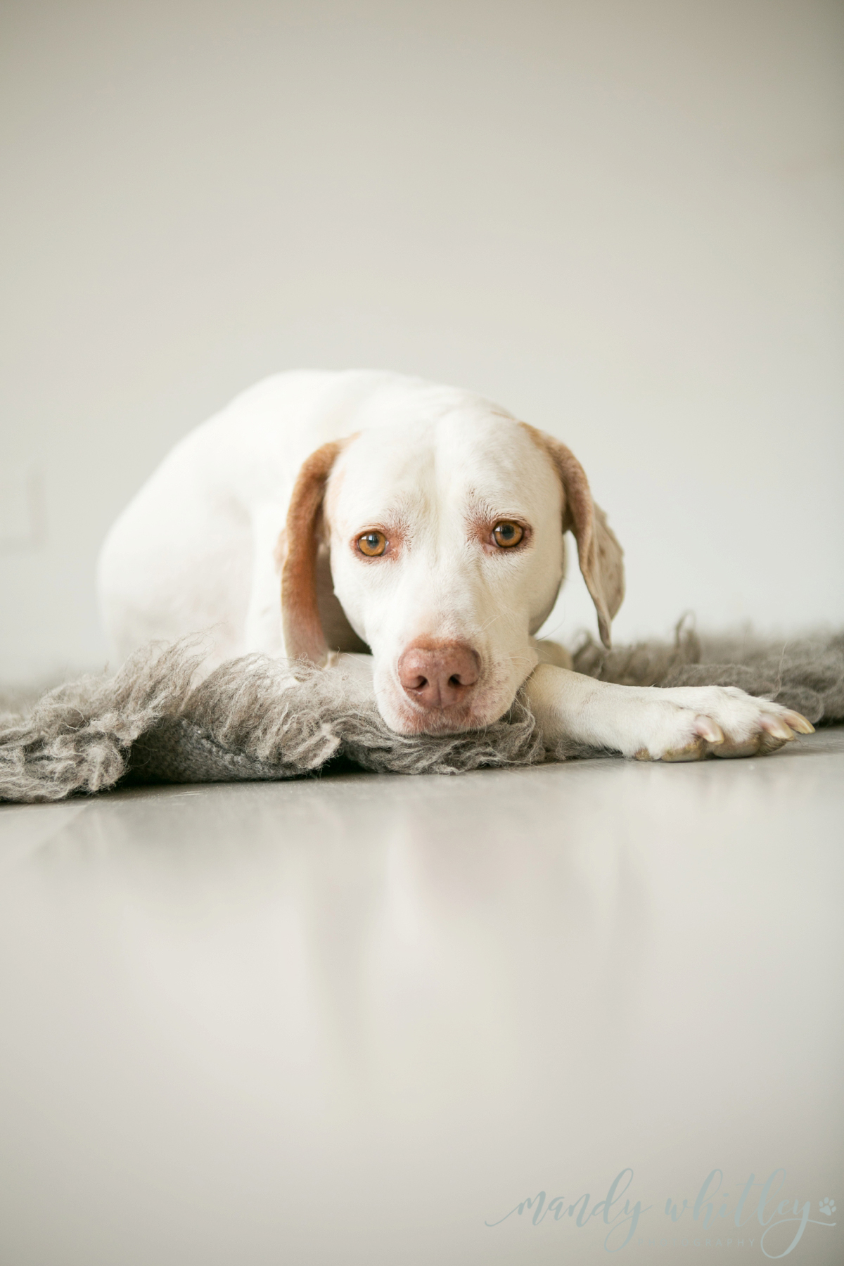 Photography for Pets and Their People | Nashville Pet Photography