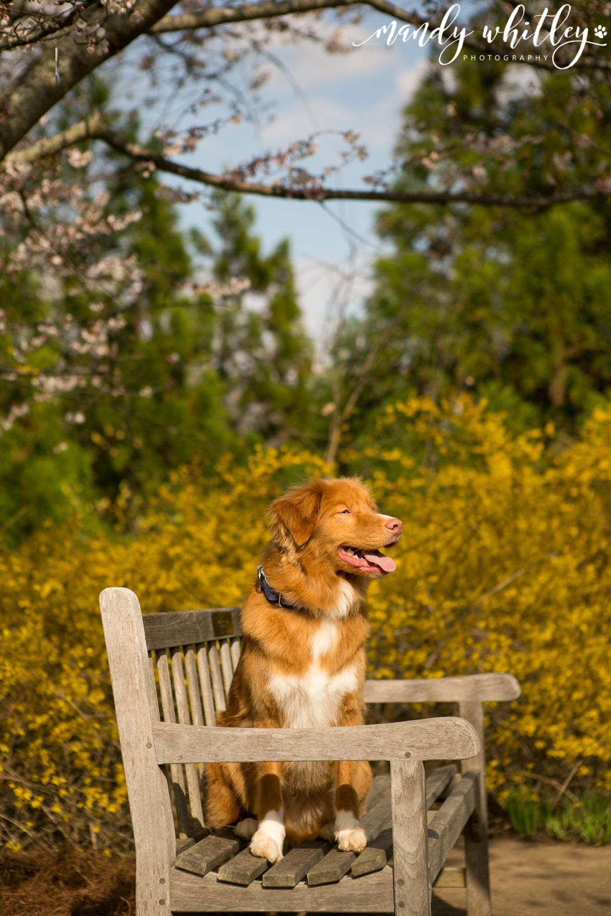 best dog photographers in nashville