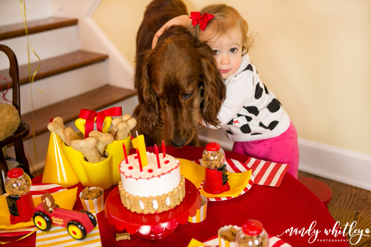 Pet Photographer in Nashville Puppy Birthday Party