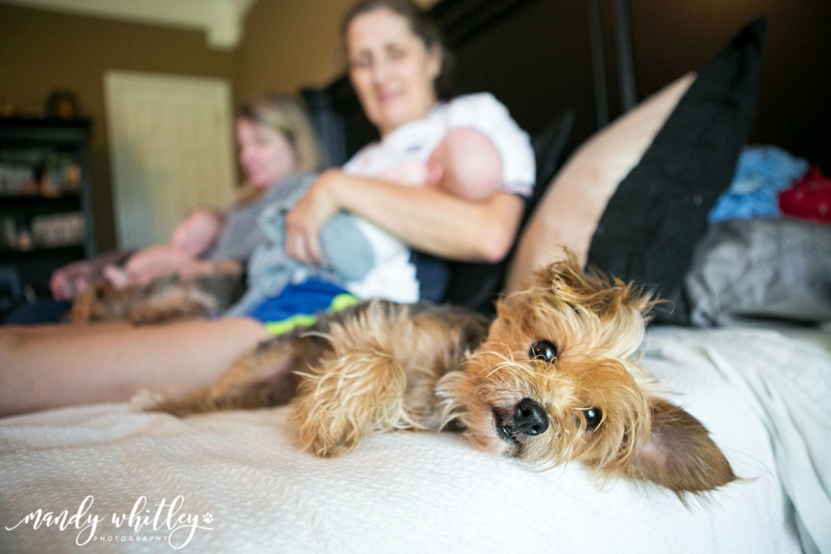 Newborn Photographer in Nashville Pet Photography
