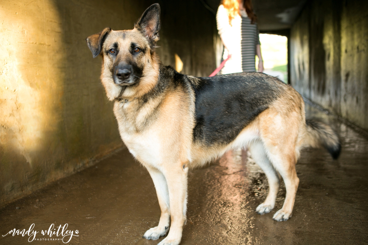 Dog Photographer in Nashville Mandy Whitley Photography