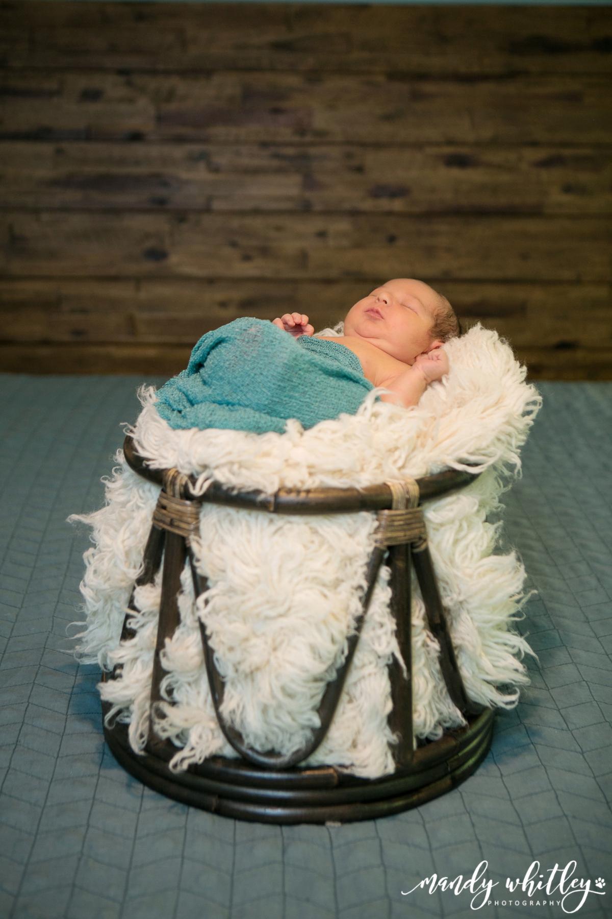 Nashville Newborn Photographer with Pets