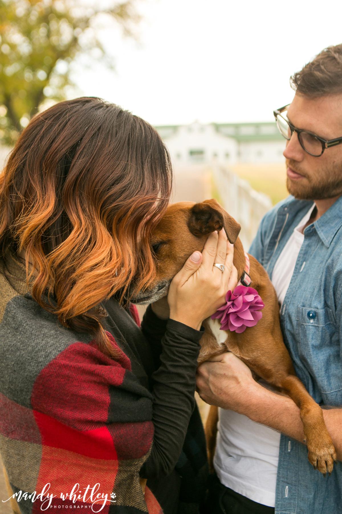 Nashville Dog Photographer at Harlinsdale Farm and Downtown Franklin