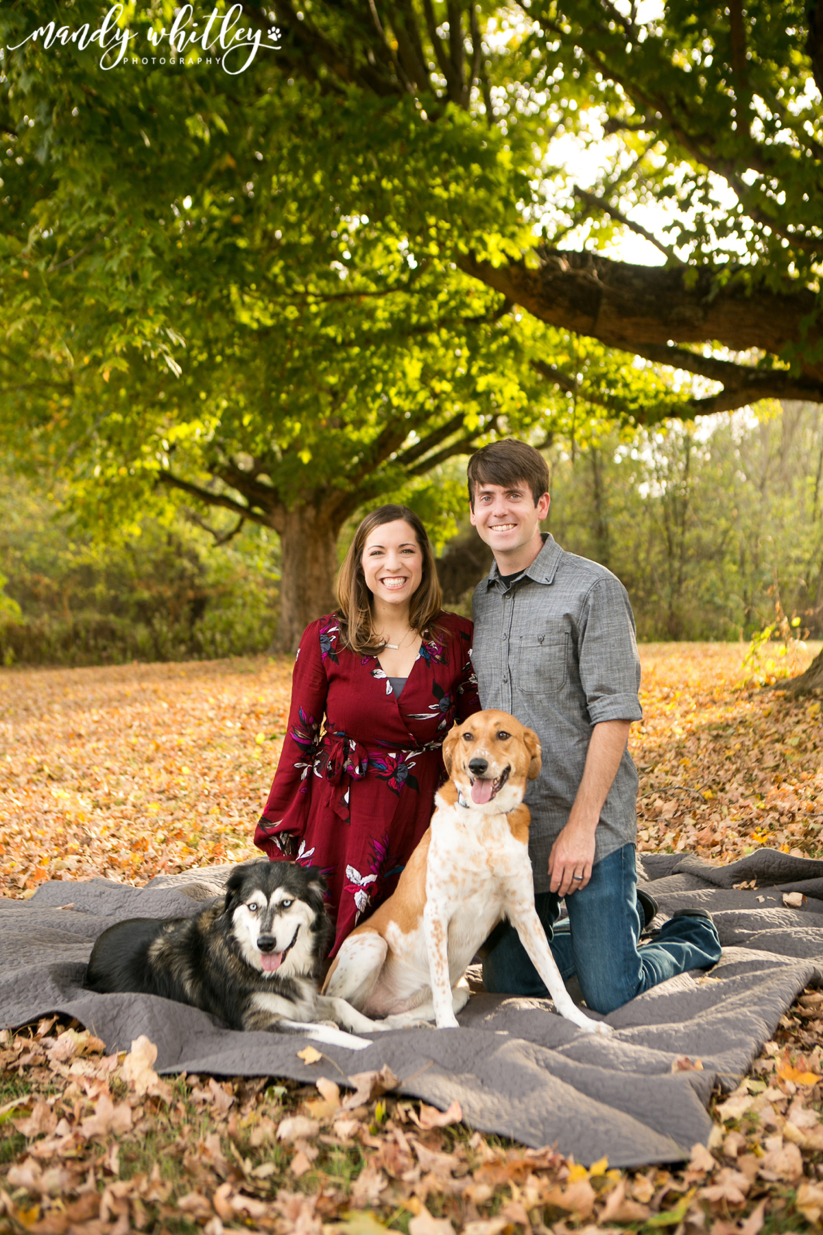 Pet Photographer in Nashville Dog Photography