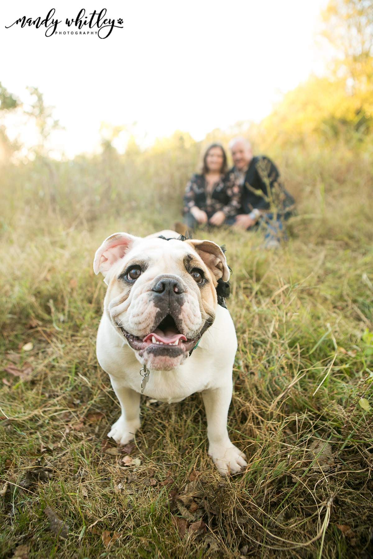 Pet Photographer in Nashville
