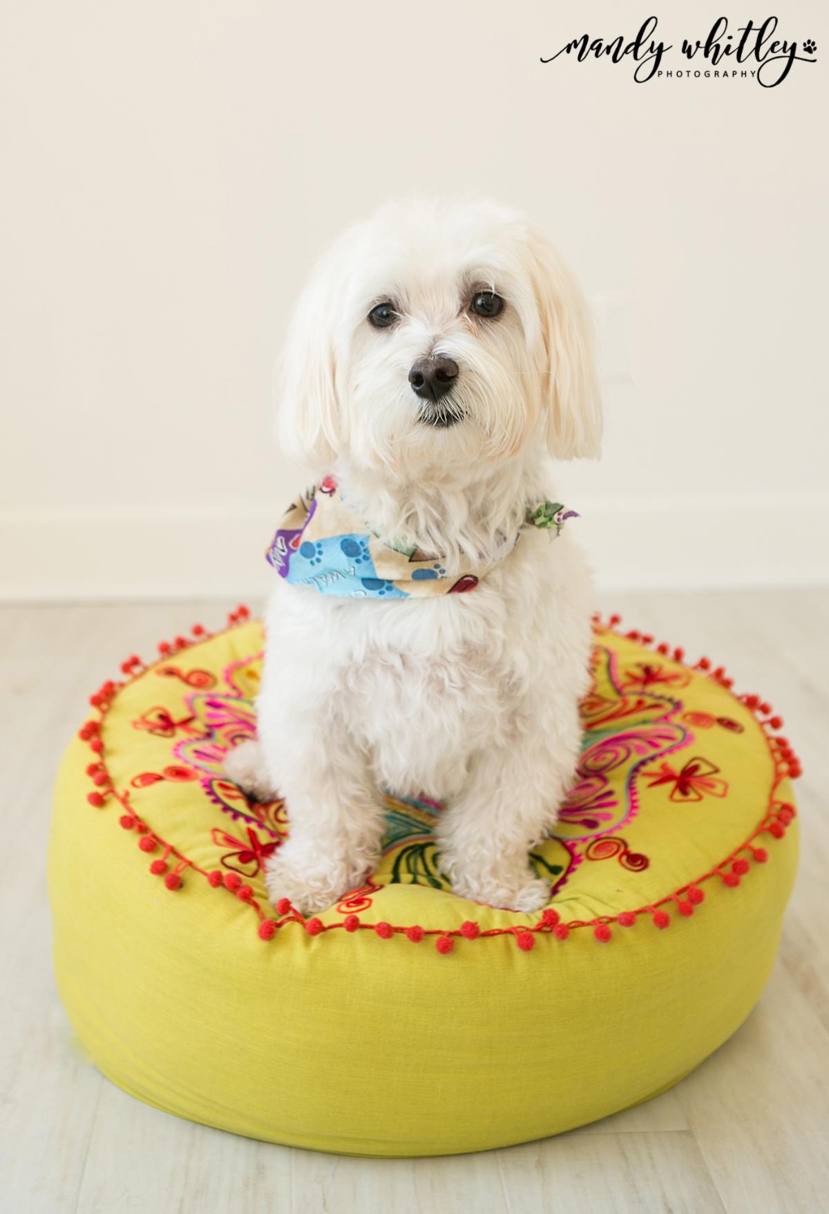 Nashville Dog Pet Photographer
