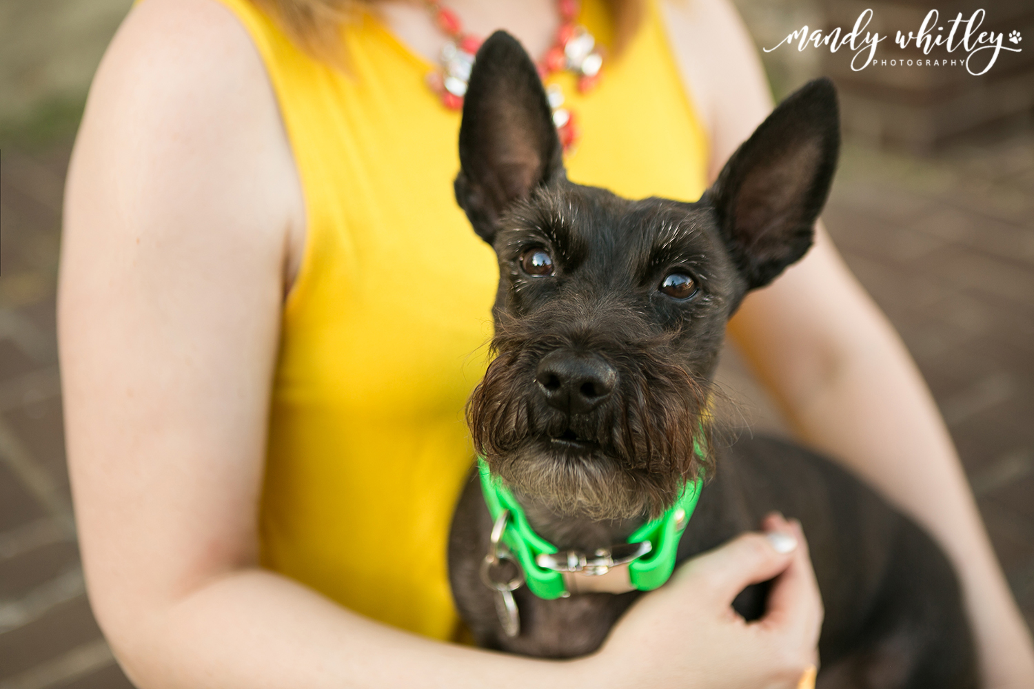 Portrait photography ideas with dogs