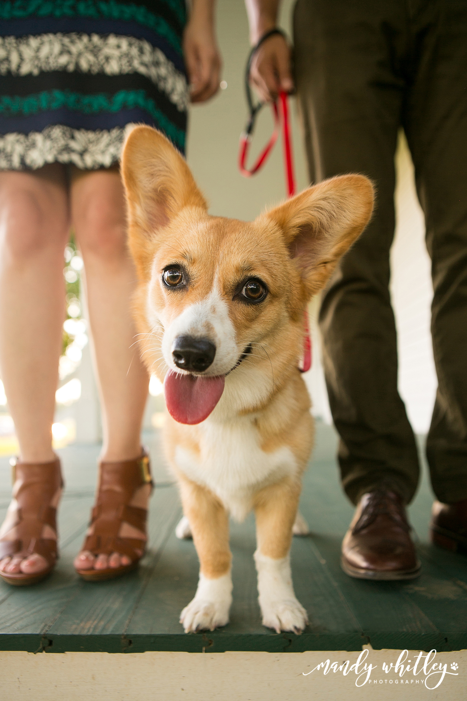 Franklin Tennessee Dog Photographer