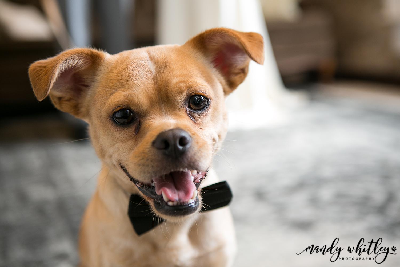 Pet-Friendly Wedding