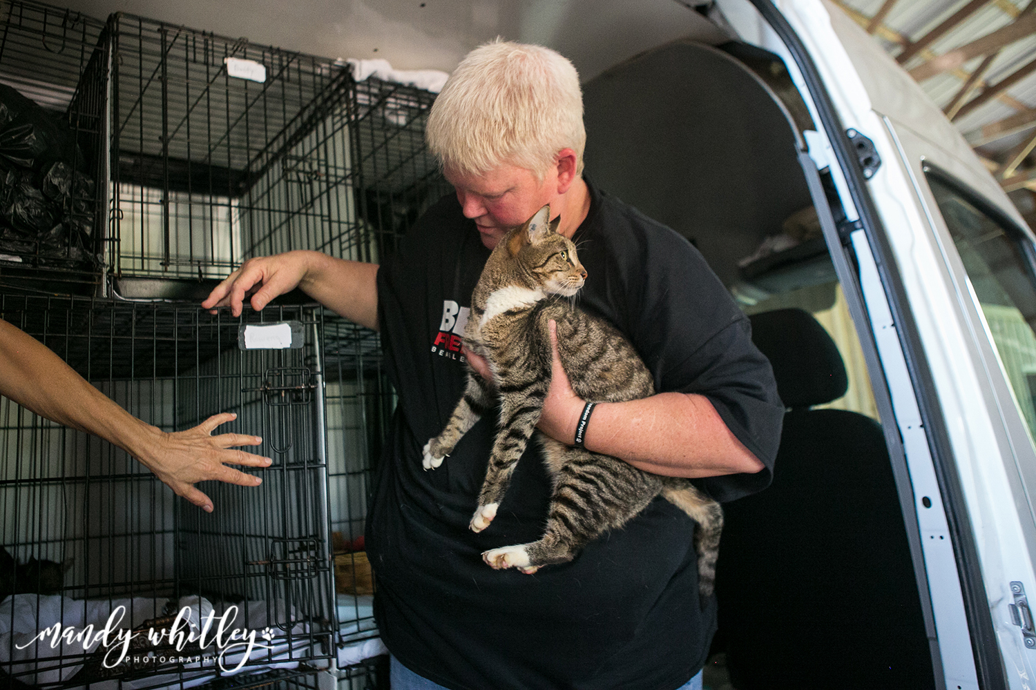 Cat Rescue from Lab