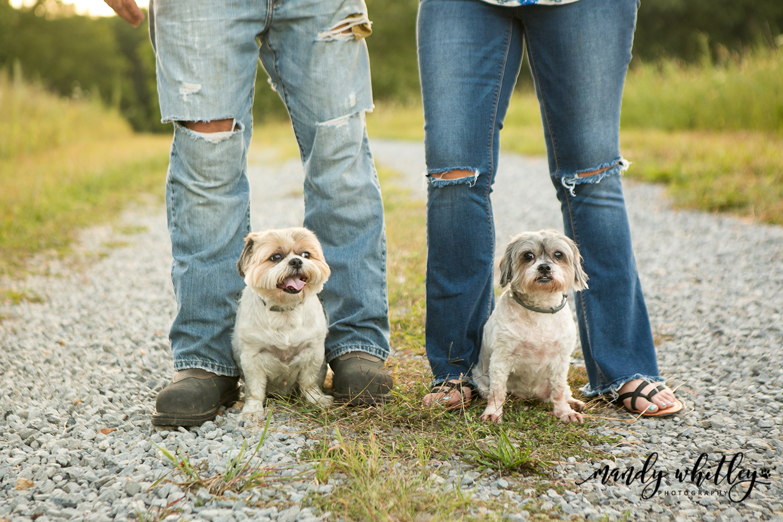 Westmoreland Pet Photographer