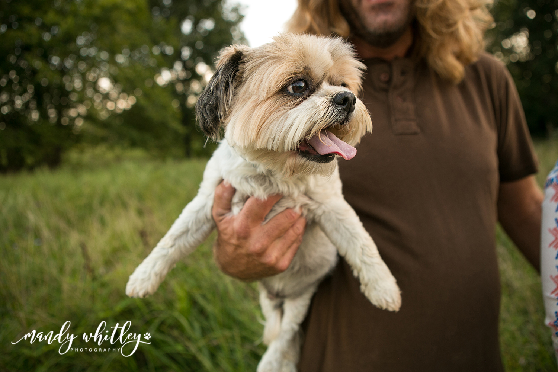 Tennessee Dog Photographer