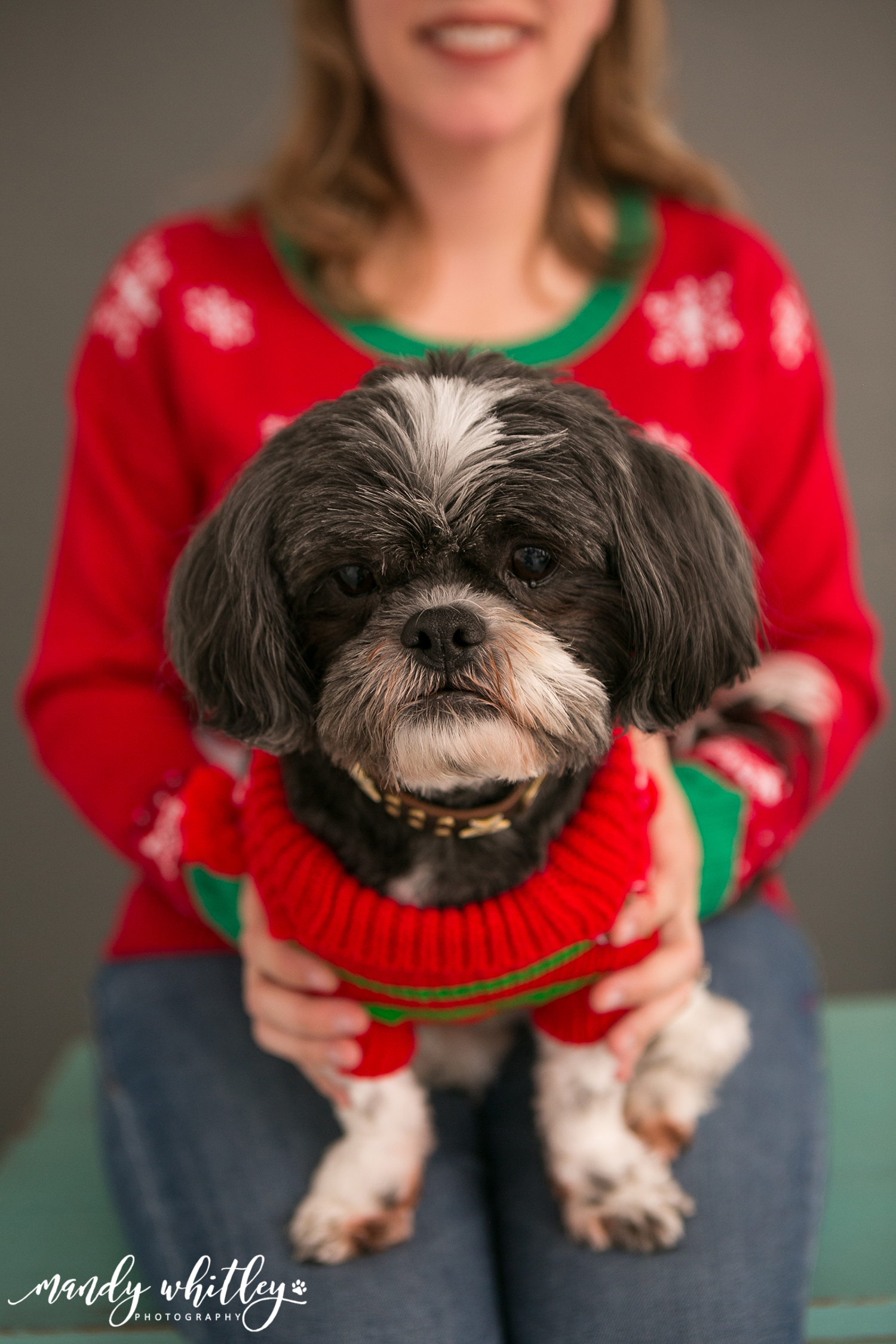 Holiday Sweater Family Portraits with Pets