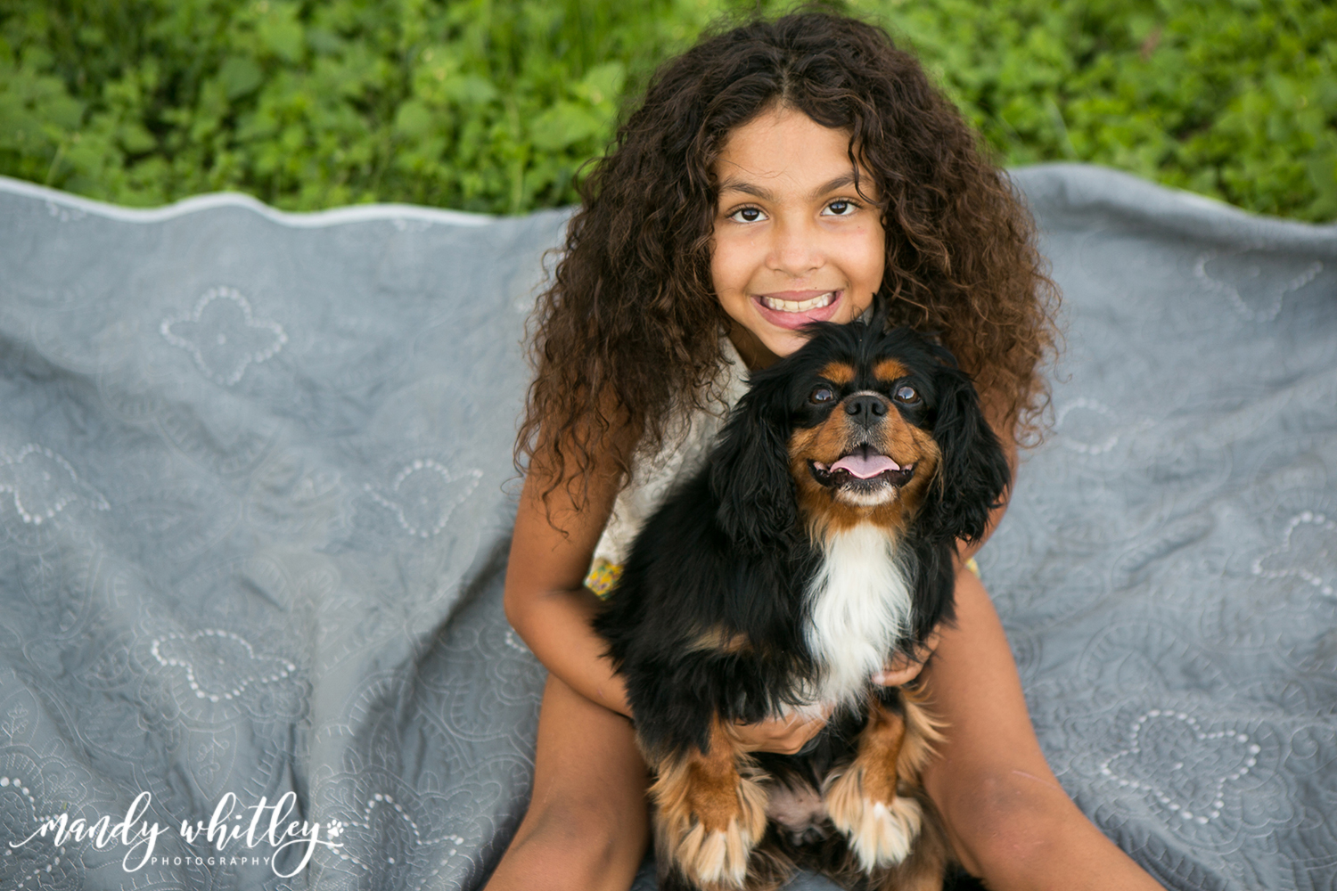 King Charles Cavaliers Dog Photographer