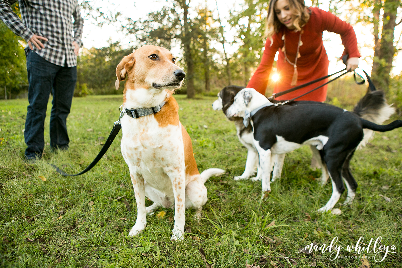 Dog Photographer in Nashville Tennessee