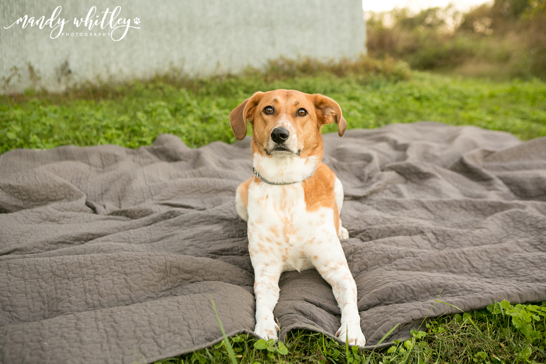 Best Dog Photographer Tennessee