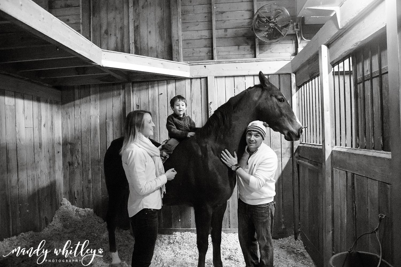 Horse Pet Photographer in Nashville TN