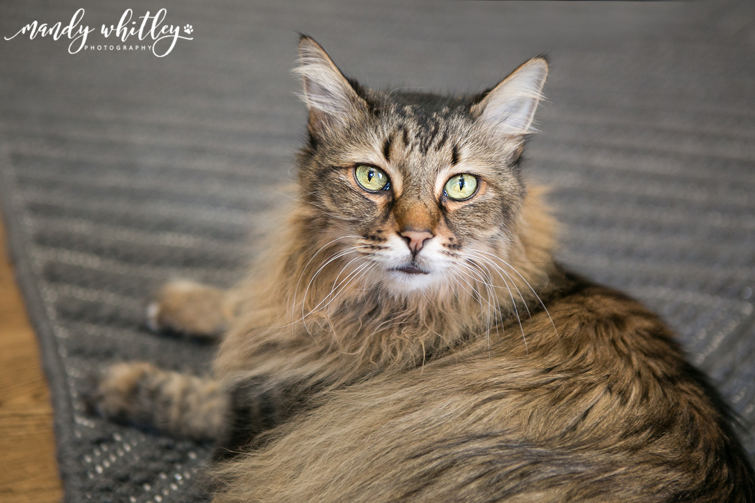 Cat Photographer in Nashville Tennessee