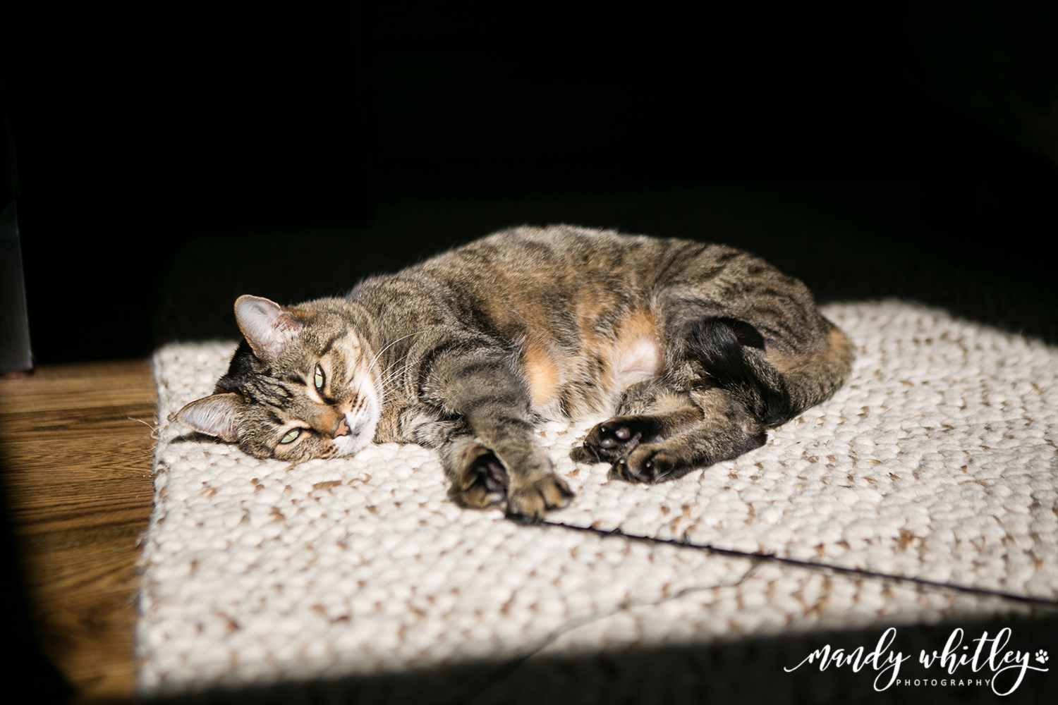 Best Cat Photographer in Nashville Tennessee